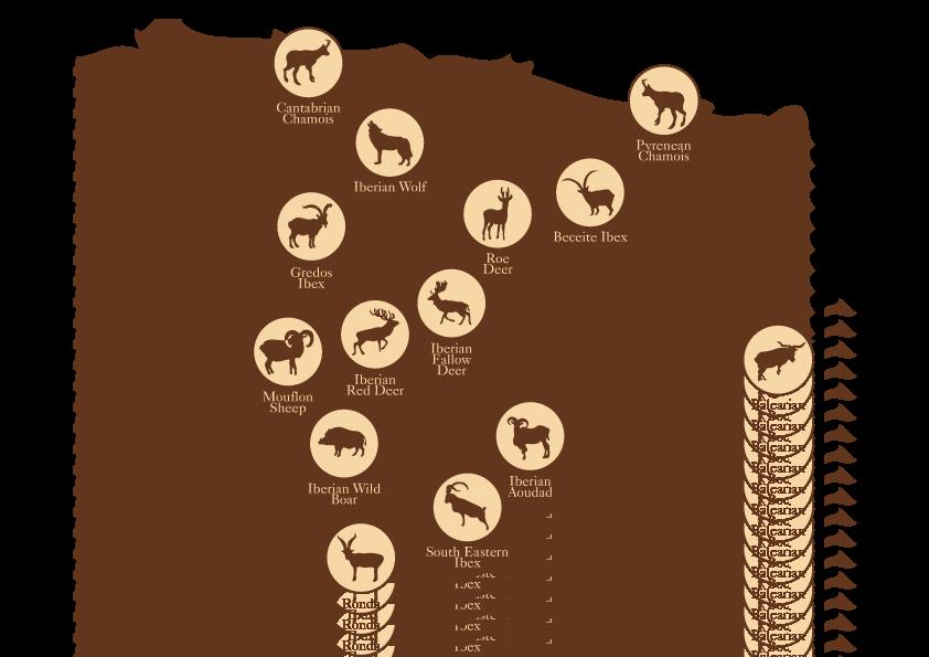 Spanish Safari